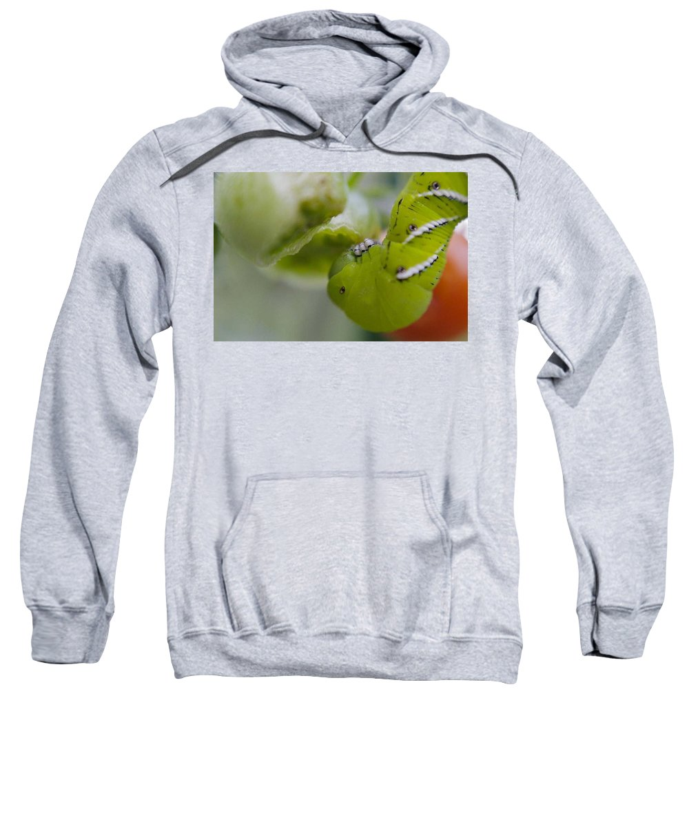 Green Sweatshirt featuring the photograph Yum by Natalie Rotman Cote