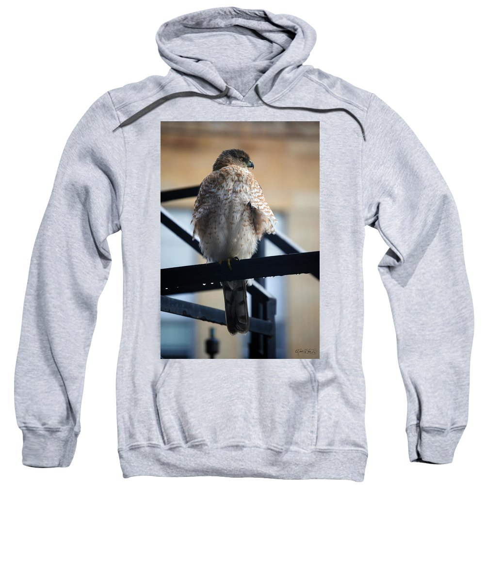 Sweatshirt featuring the photograph 01 Falcon by Michael Frank Jr