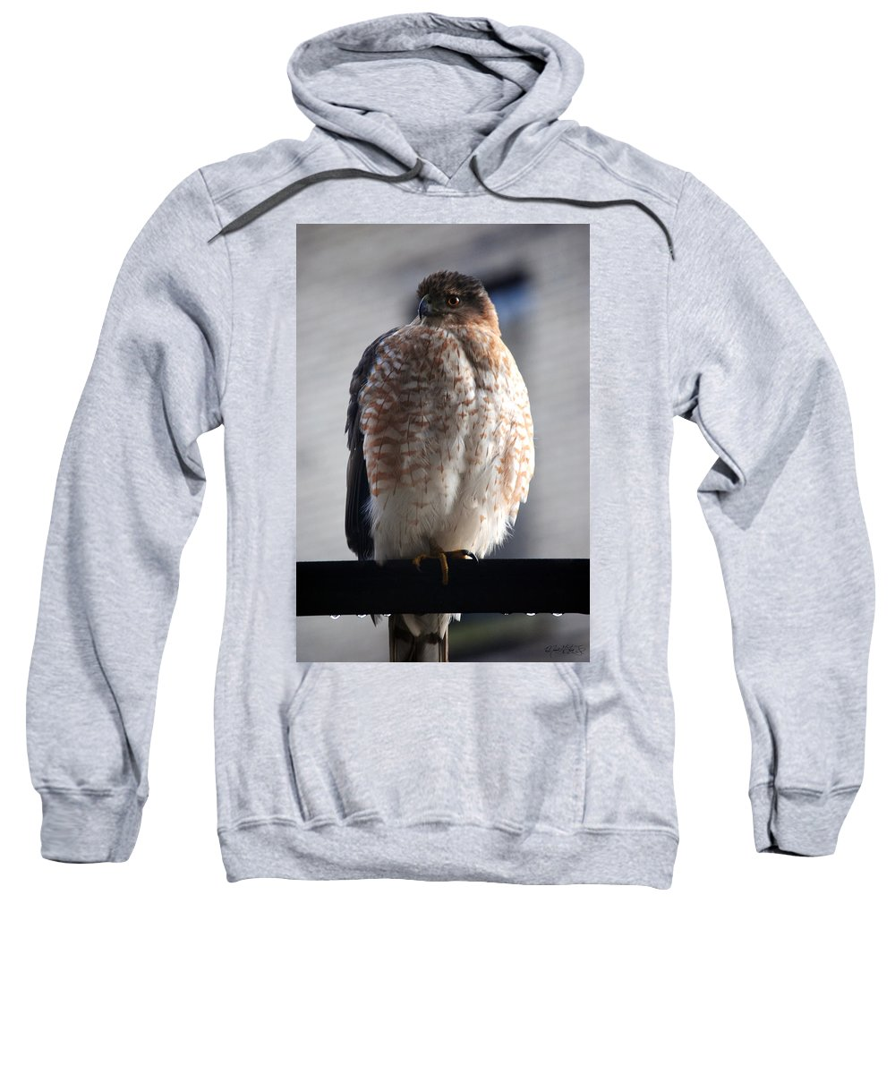 Sweatshirt featuring the photograph 06 Falcon by Michael Frank Jr