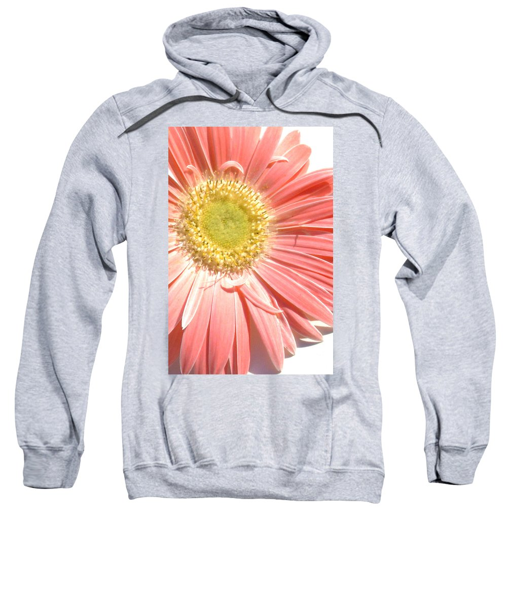 Gerbera Photographs Photographs Photographs Sweatshirt featuring the photograph 0628a-002 by Kimberlie Gerner