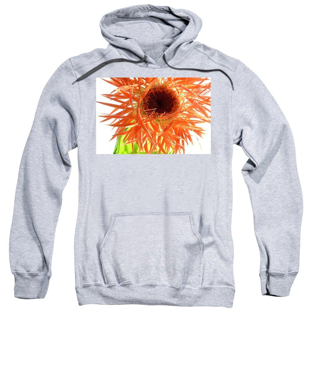 Gerbera Photographs Sweatshirt featuring the photograph 0692c-002 by Kimberlie Gerner