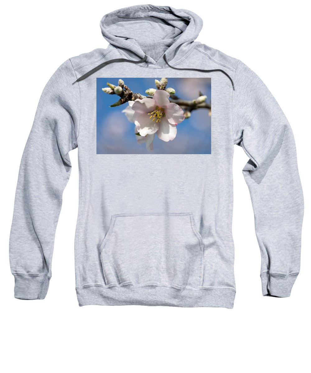 Almond Sweatshirt featuring the photograph Almond Blossom by Ralf Kaiser