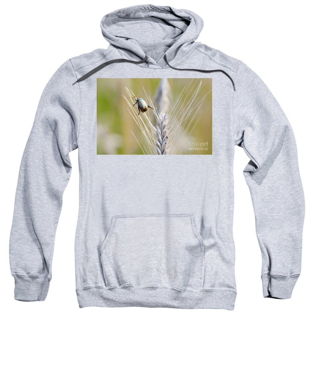 Beetle Sweatshirt featuring the photograph Beetle On The Wheat by Mats Silvan