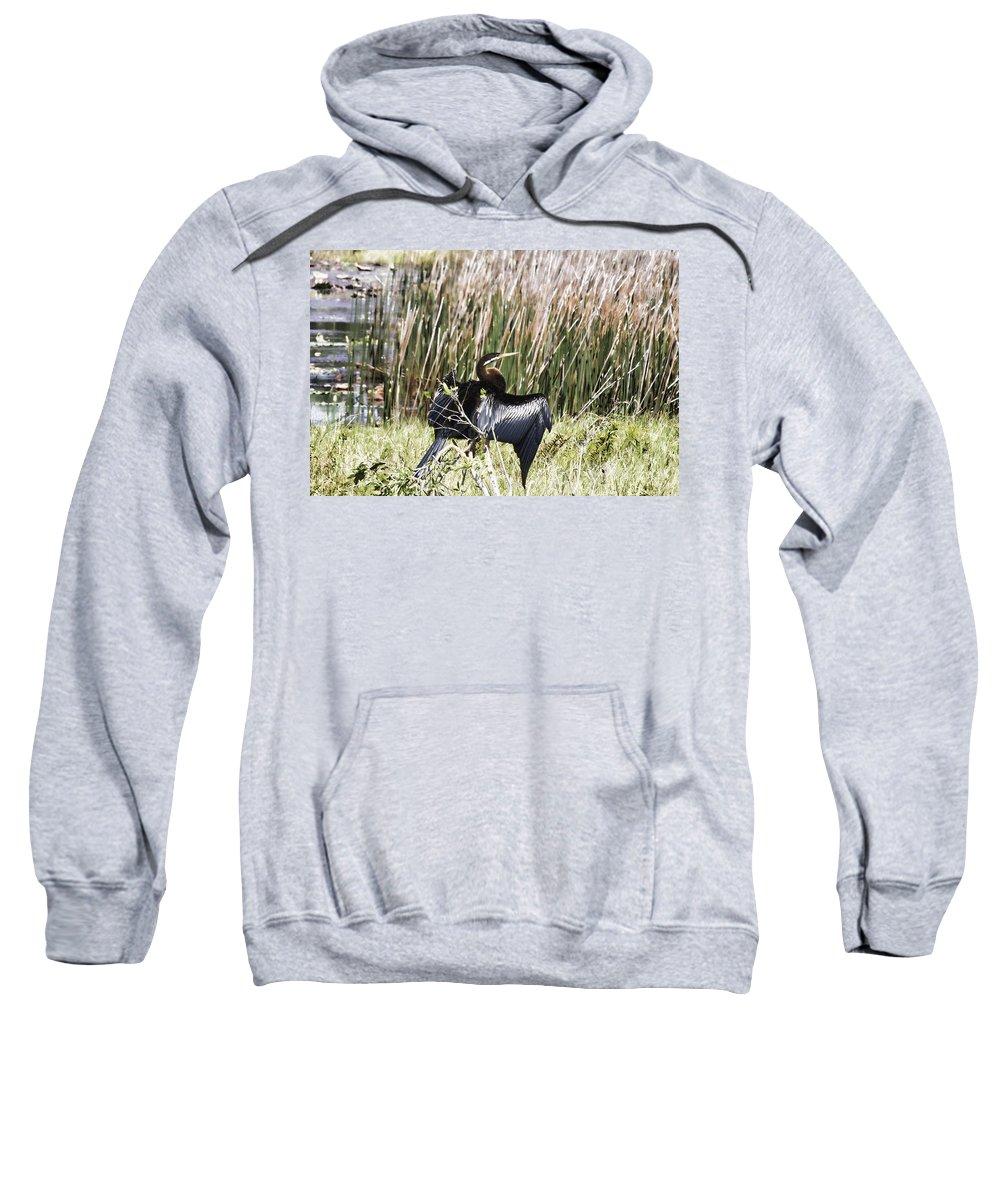 Cormorant Sweatshirt featuring the photograph Billabong V5 by Douglas Barnard