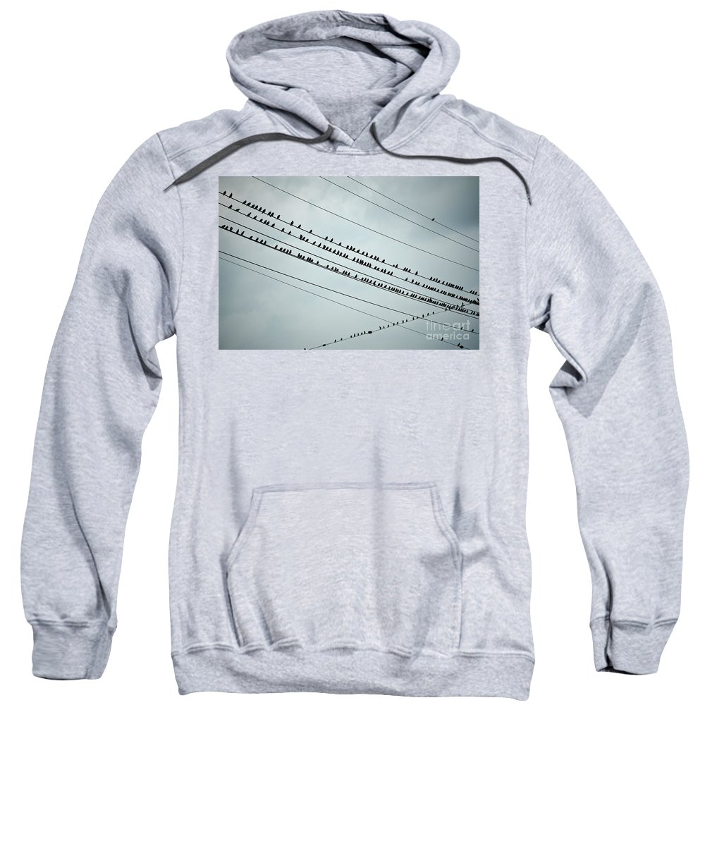 Aves Sweatshirt featuring the photograph Birds On A Wire by John Greim