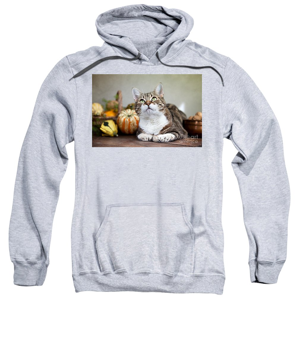 Cat Sweatshirt featuring the photograph Cat And Pumpkins by Nailia Schwarz
