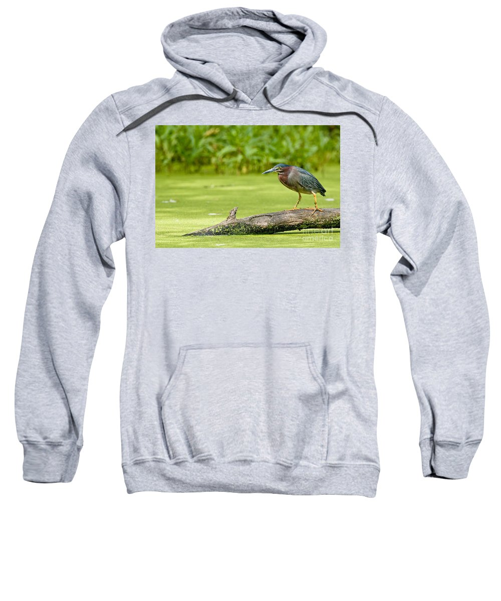Green Heron Sweatshirt featuring the photograph Green Heron by Michael Cummings