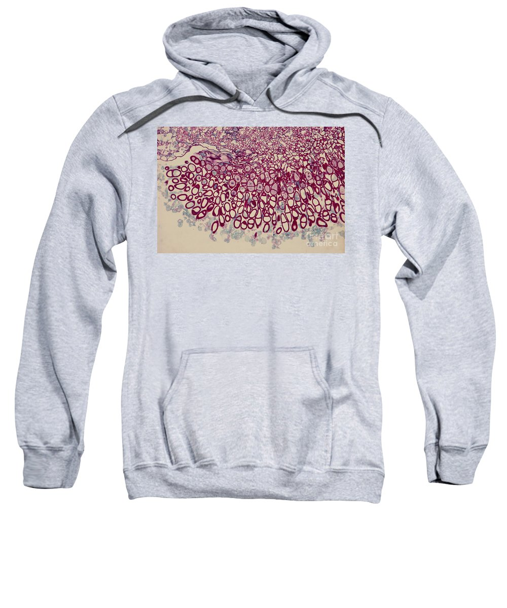 Light Micrograph Sweatshirt featuring the photograph Hollyhock Rust by M. I. Walker