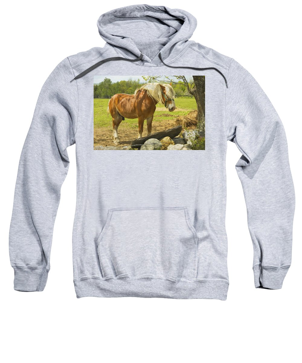 Horse Sweatshirt featuring the photograph Horse Near Strone Wall In Field Spring Maine by Keith Webber Jr