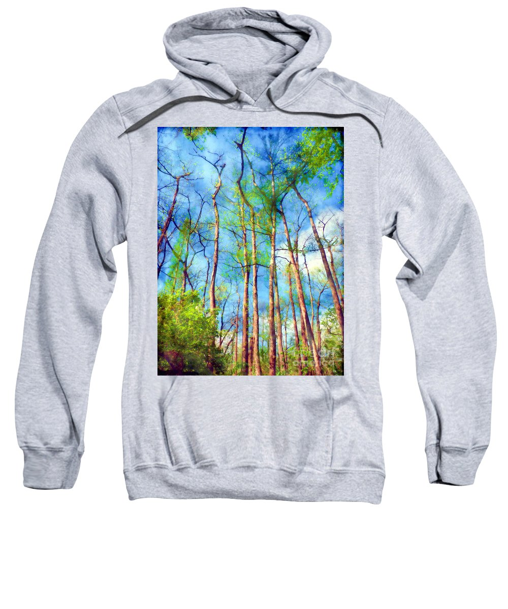 Trees Sweatshirt featuring the photograph Looking Up by Judi Bagwell