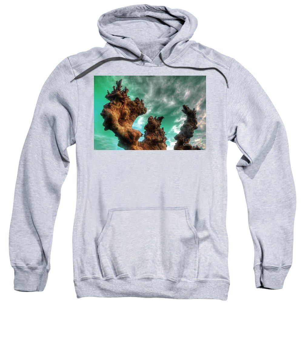 Abstract Sweatshirt featuring the photograph Pruned by Rob Hawkins