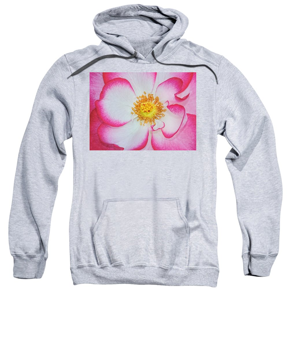 Rose Sweatshirt featuring the photograph Red And White by Dave Mills