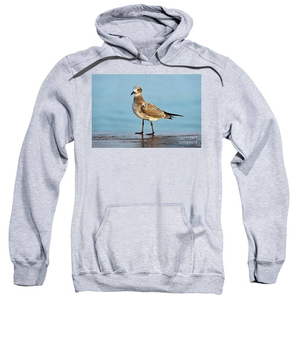 Animal Sweatshirt featuring the photograph Seagull by John Greim