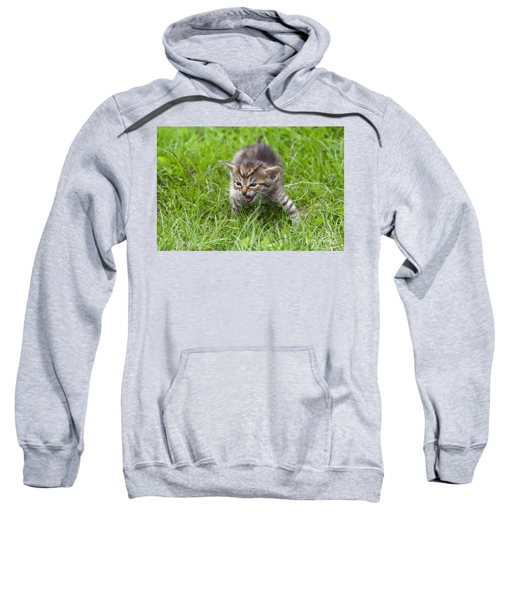 Adorable Sweatshirt featuring the photograph Small Kitten In The Grass by Michal Boubin