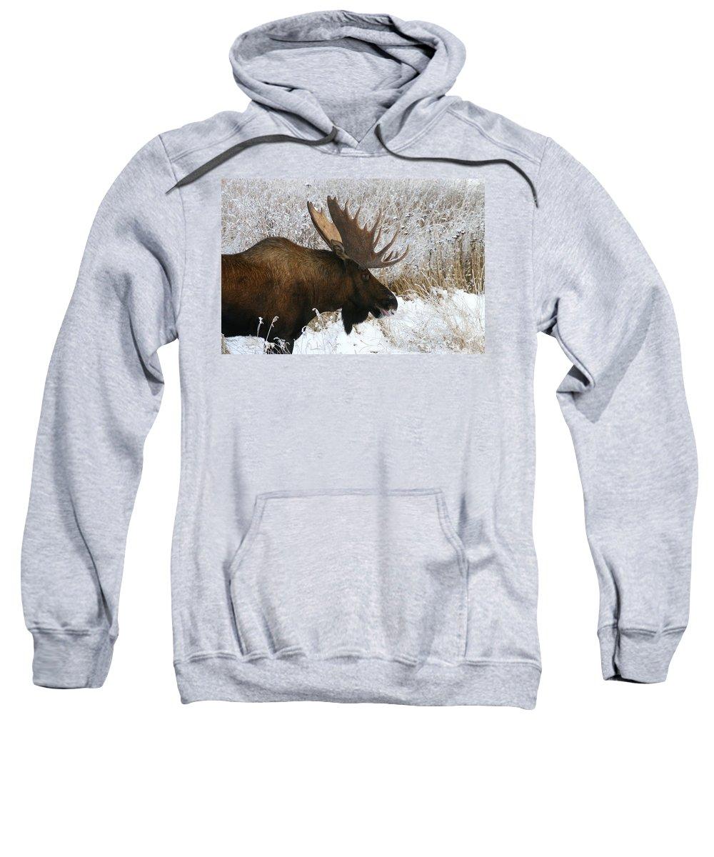 Alaska Sweatshirt featuring the photograph Snow Bull by Doug Lloyd