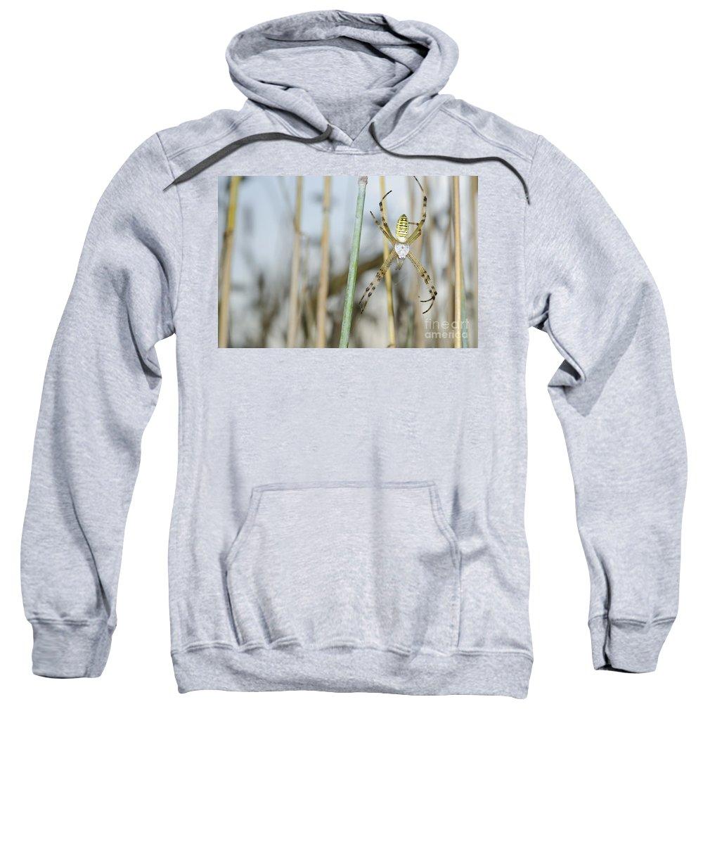 Spider Sweatshirt featuring the photograph Spider by Mats Silvan