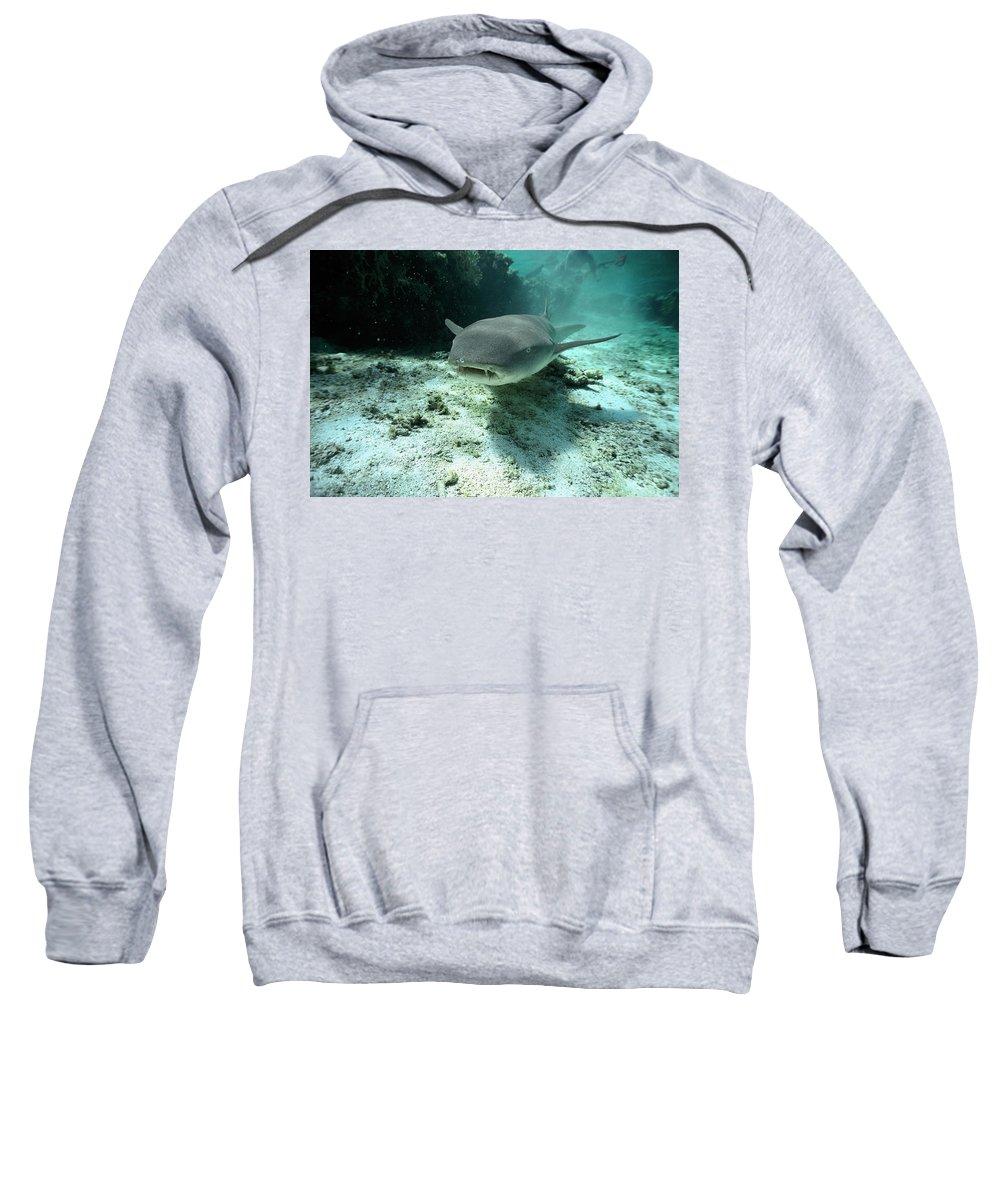 Mp Sweatshirt featuring the photograph Tawny Nurse Shark Nebrius Ferrugineus by Mike Parry