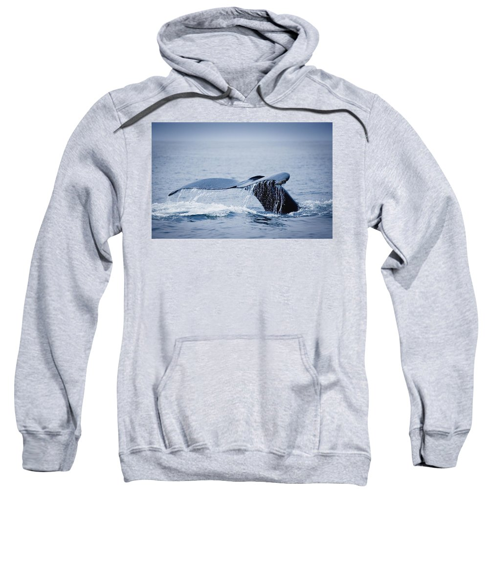 Outdoors Sweatshirt featuring the photograph Whales Fluke by Darren Greenwood