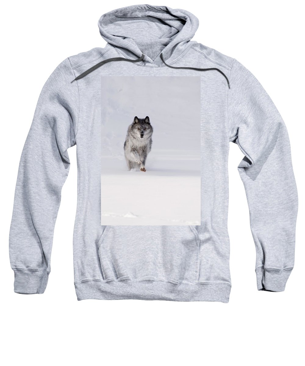 Animal Sweatshirt featuring the photograph Wolf Running In The Snow by Philippe Widling