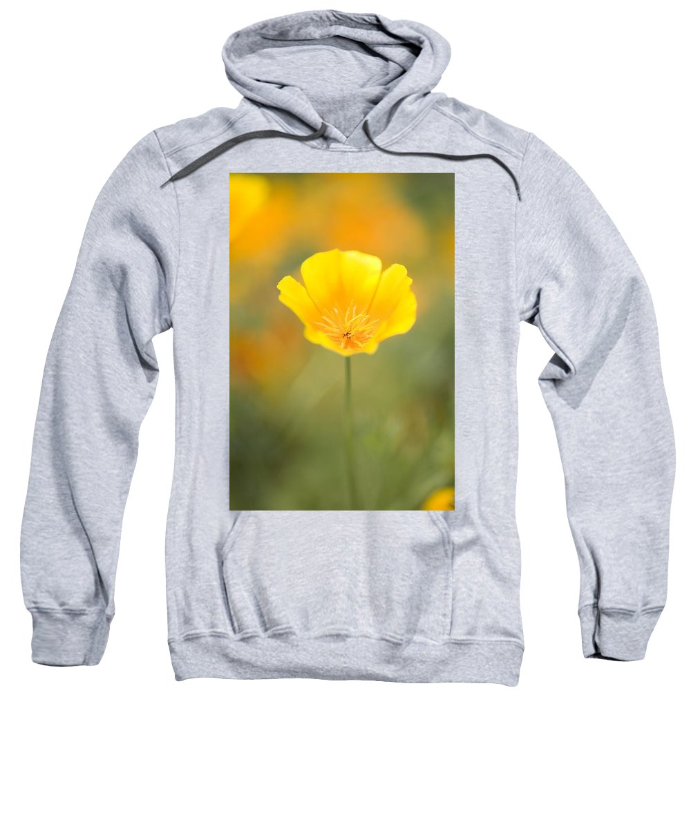Cheerful Sweatshirt featuring the photograph Yellow Poppy Flower, Mount Hood by Craig Tuttle