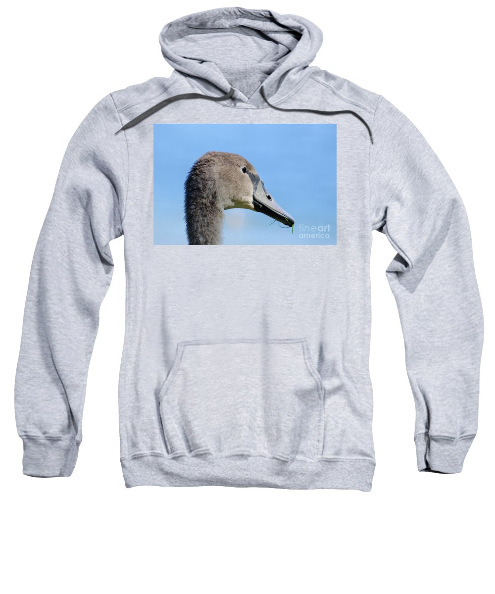 Swan Sweatshirt featuring the photograph Young Swan by Mats Silvan