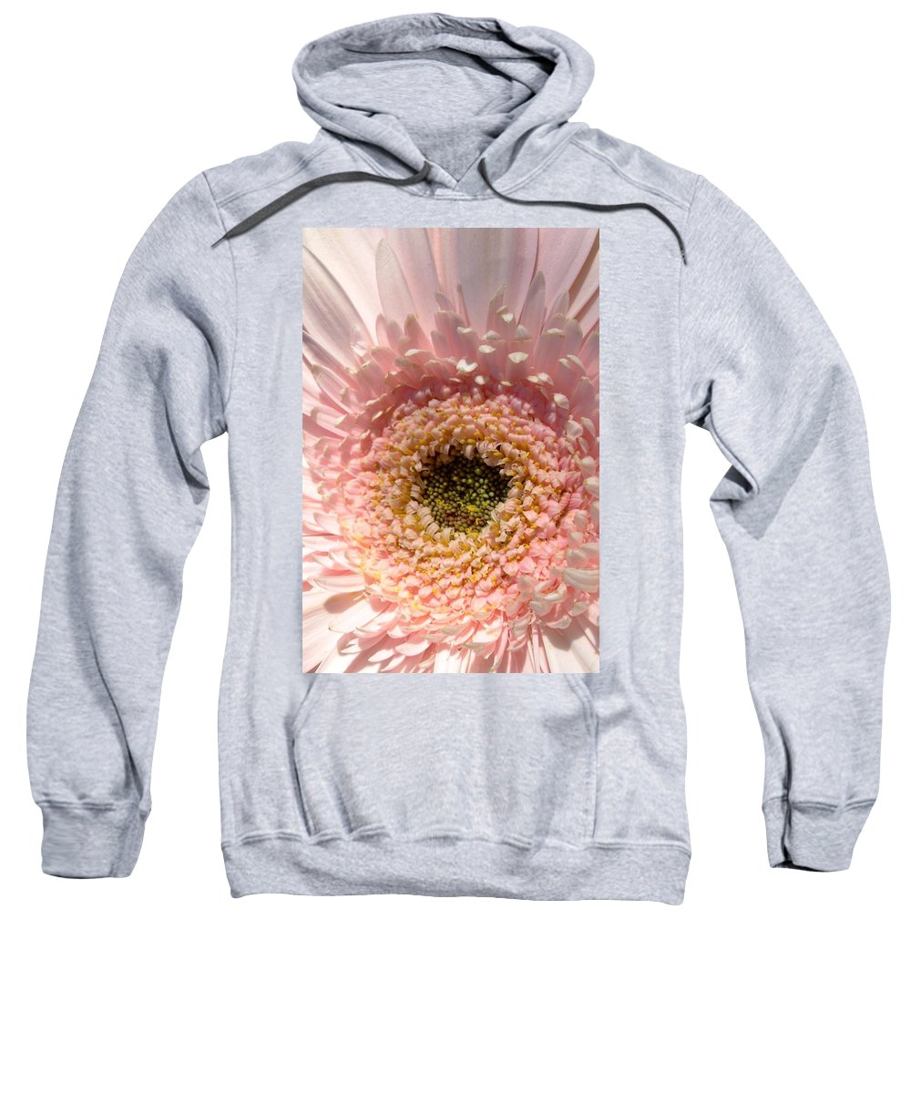 Gerbera Photographs Sweatshirt featuring the photograph 1005c-001 by Kimberlie Gerner