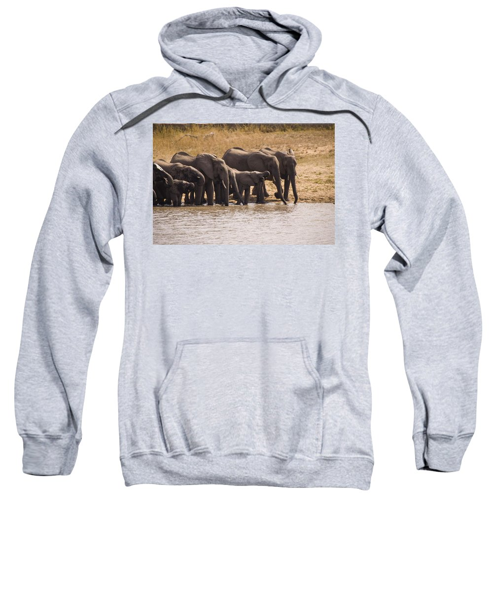 South Africa Sweatshirt featuring the photograph African Elephant Loxodonta Africana by Stuart Westmorland