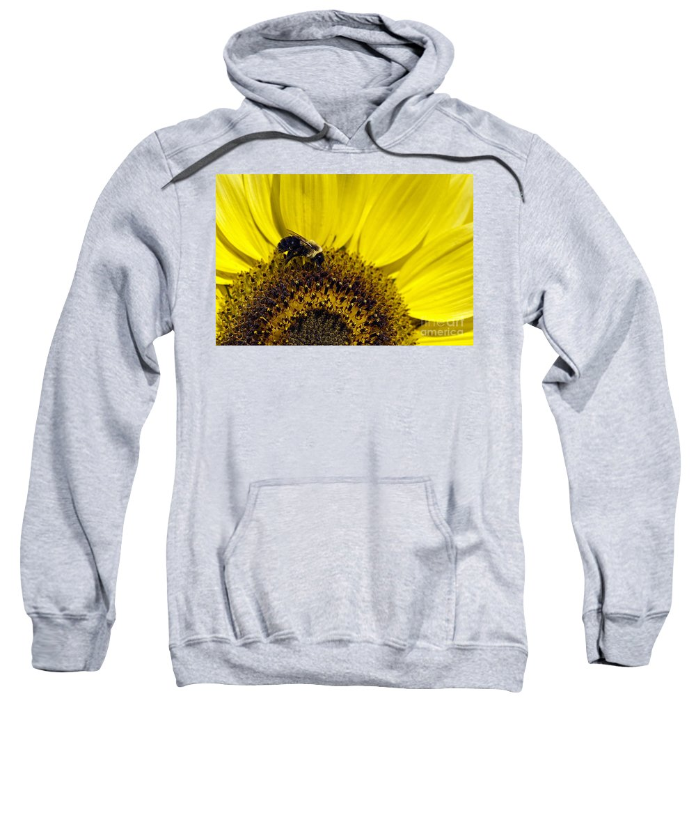 Helianthus Annuus Sweatshirt featuring the photograph Bee And Sunflower by John Greim