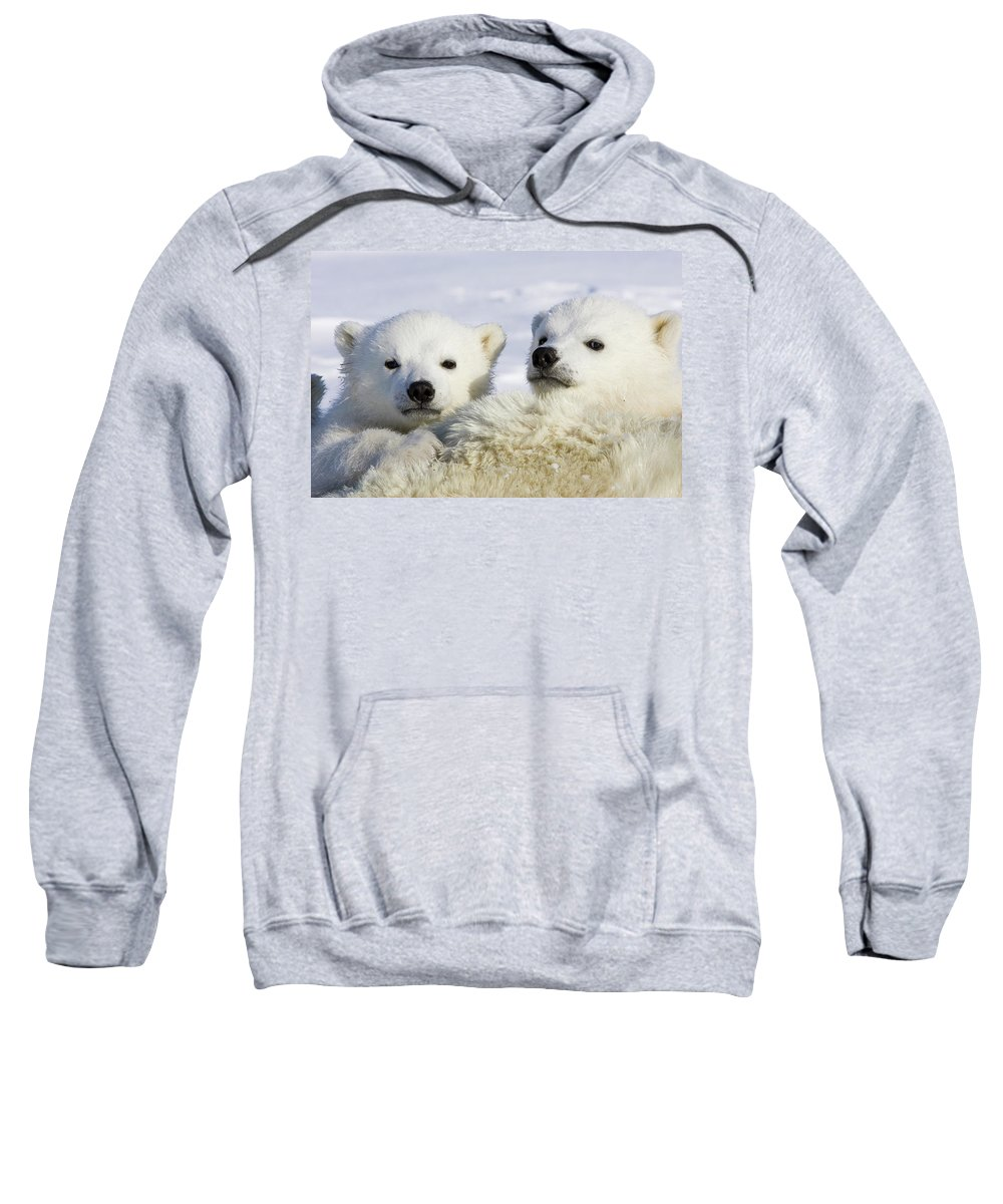 Mp Sweatshirt featuring the photograph Polar Bear Ursus Maritimus Three by Suzi Eszterhas