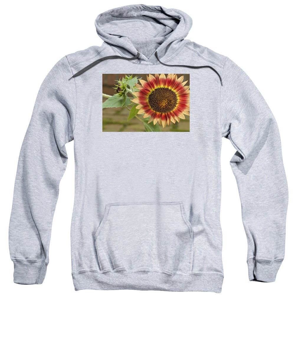 Agriculture Sweatshirt featuring the photograph Sunflower by Jack R Perry