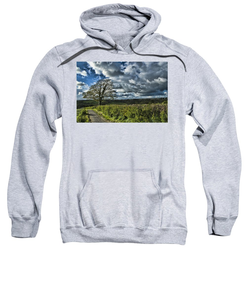 Sycamore Tree Sweatshirt featuring the photograph Sycamore Tree by Steve Purnell