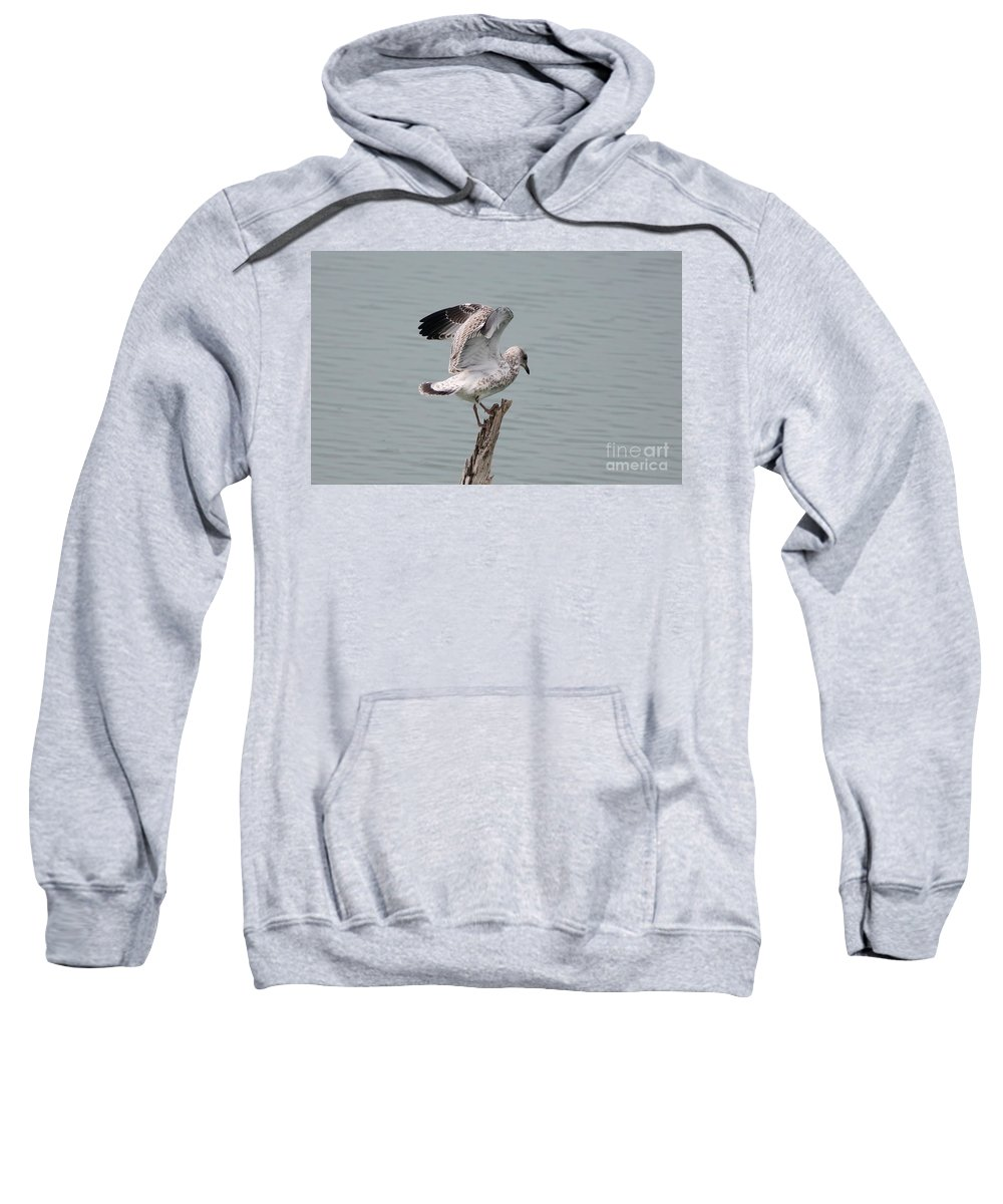Seagull Sweatshirt featuring the photograph Wing Test by Lori Tordsen