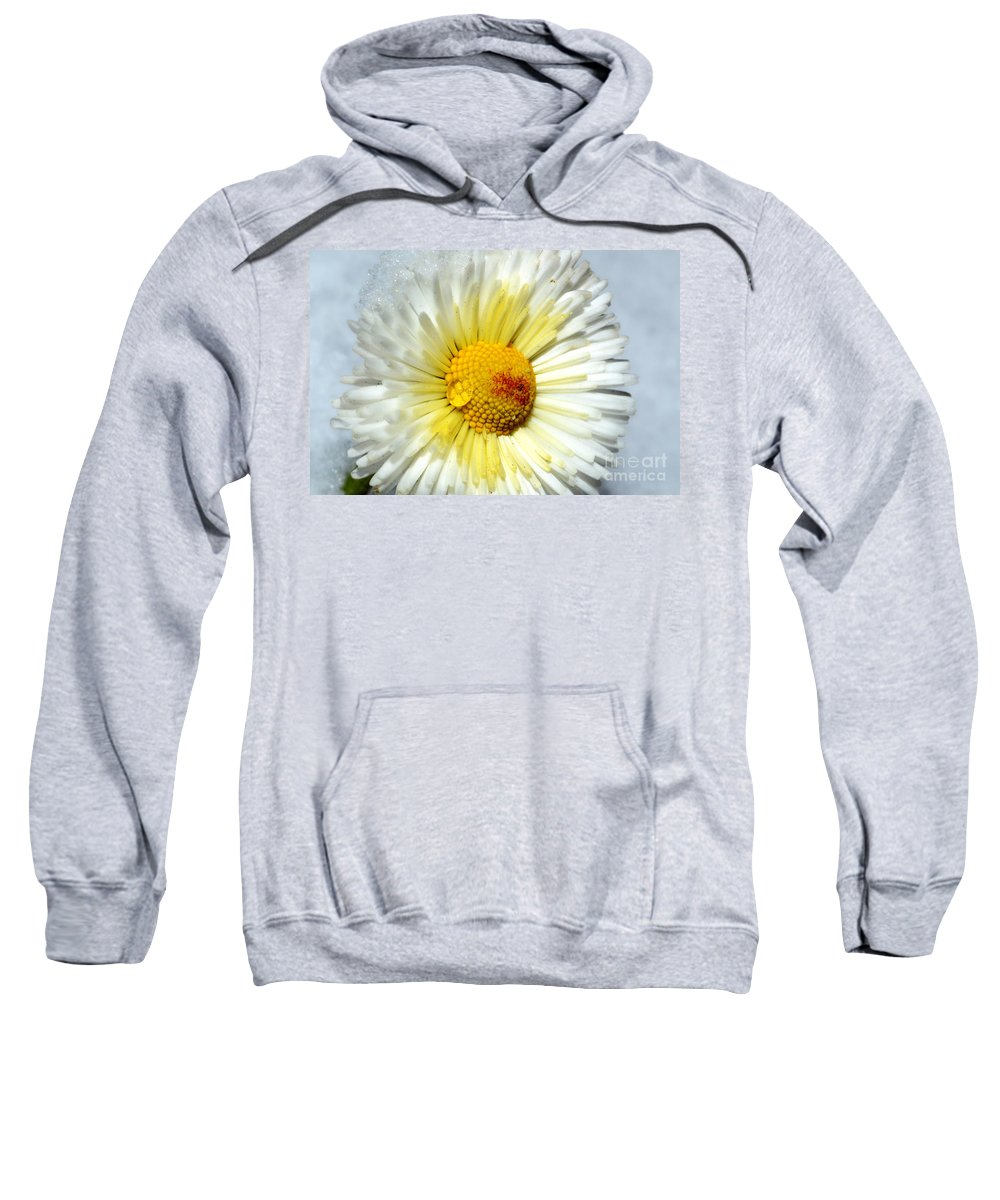 Daisy Sweatshirt featuring the photograph Daisy Flower by Mats Silvan