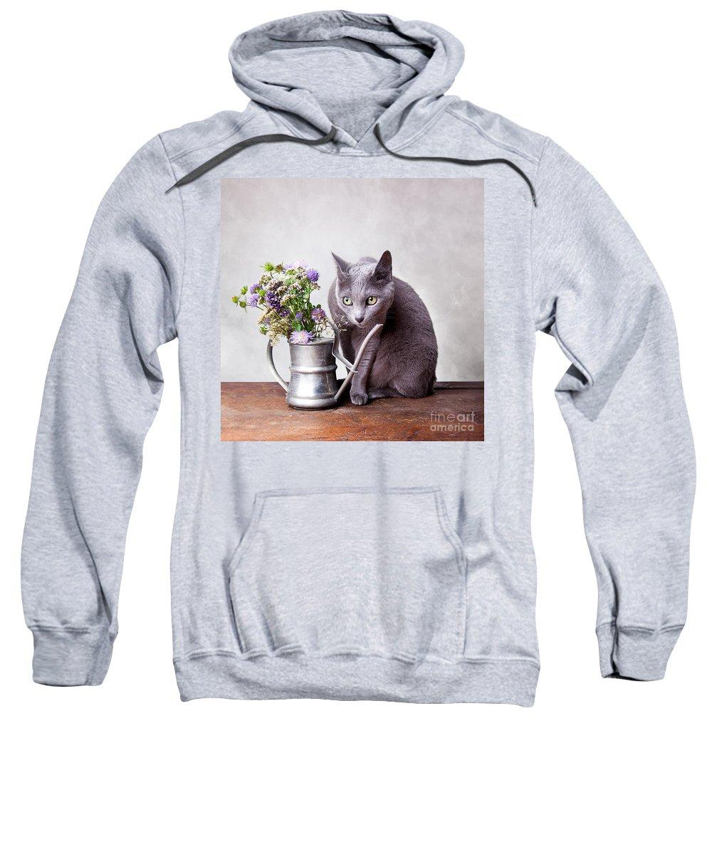 Cat Sweatshirt featuring the photograph Russian Blue by Nailia Schwarz