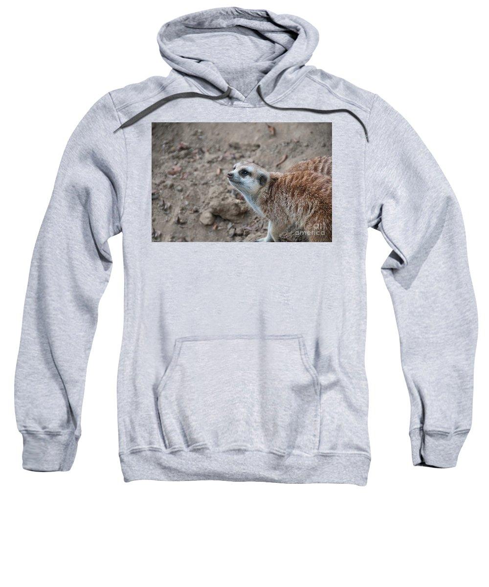 Animals Sweatshirt featuring the digital art Meerkat by Carol Ailles