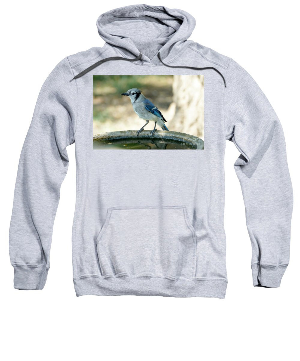 Blue-jay Sweatshirt featuring the photograph Blue-jay by Lori Tordsen
