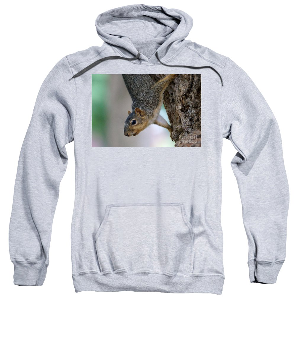 Squirrel Sweatshirt featuring the photograph Hanging Around by Lori Tordsen