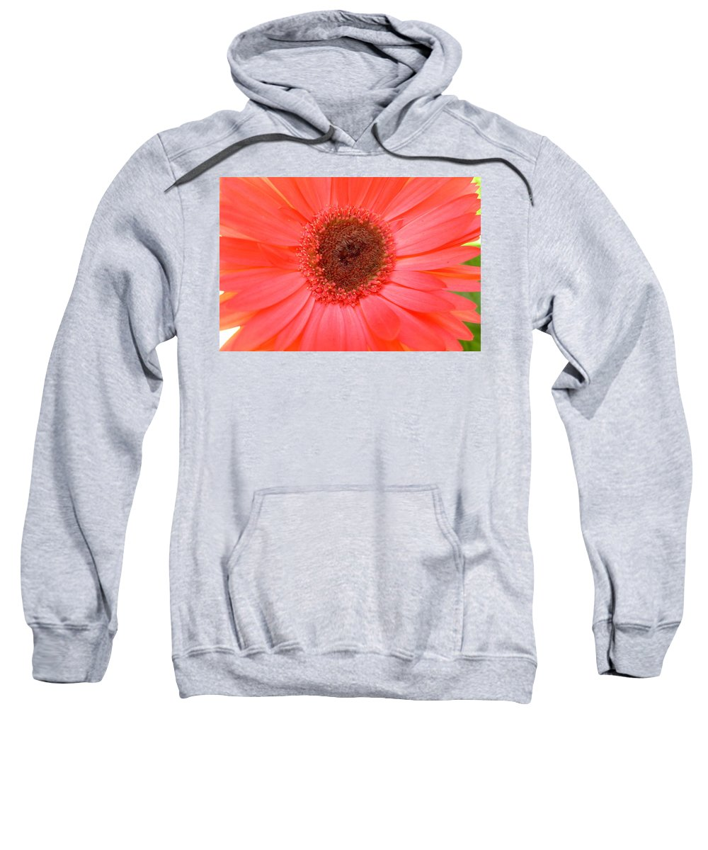 Gerbera Photographs Sweatshirt featuring the photograph 5324-002 by Kimberlie Gerner