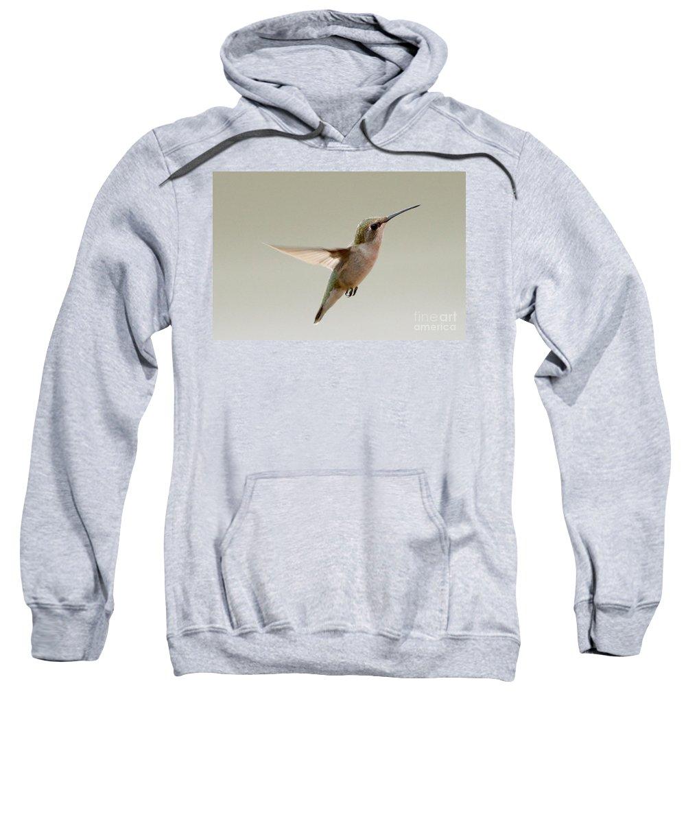 Birds Sweatshirt featuring the photograph Hummingbird by Lori Tordsen