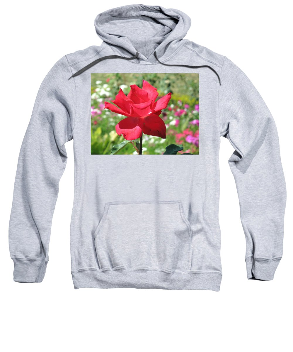 Beautiful Sweatshirt featuring the photograph A Beautiful Red Flower Growing At Home by Ashish Agarwal
