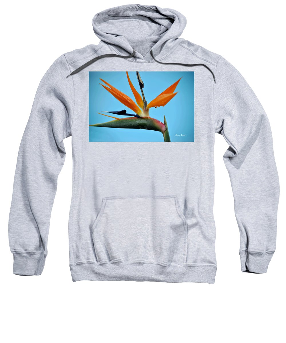 Rain Drops Sweatshirt featuring the photograph A Bird By The Pool by Maria Nesbit