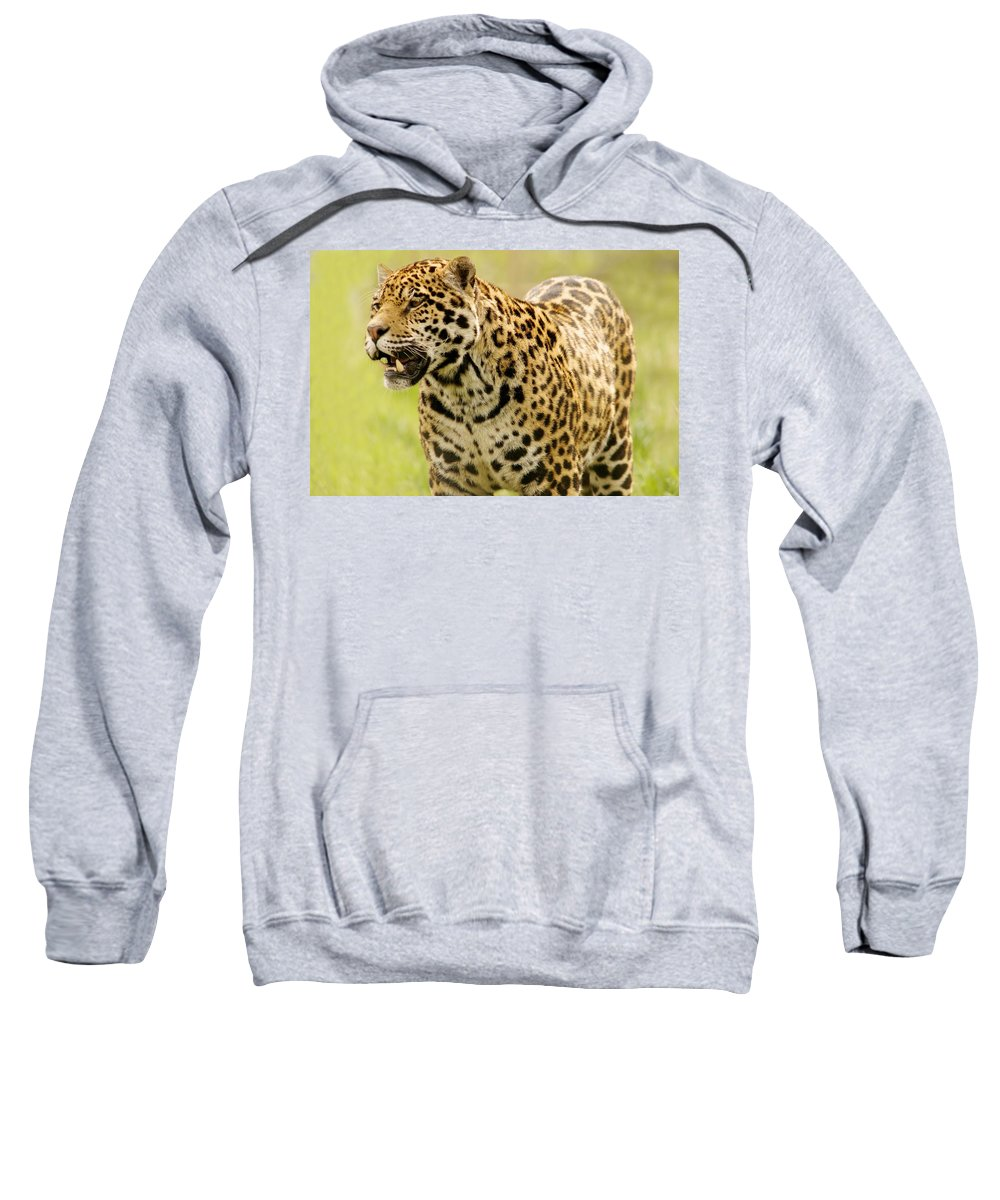 Animal Sweatshirt featuring the photograph A Leopard by Con Tanasiuk