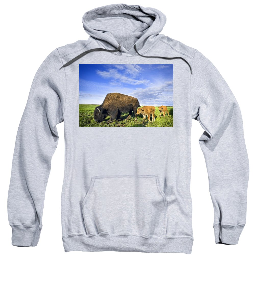 Animal Family Sweatshirt featuring the photograph A Sow Bison Guides Her Calves On A Walk by Richard Wear