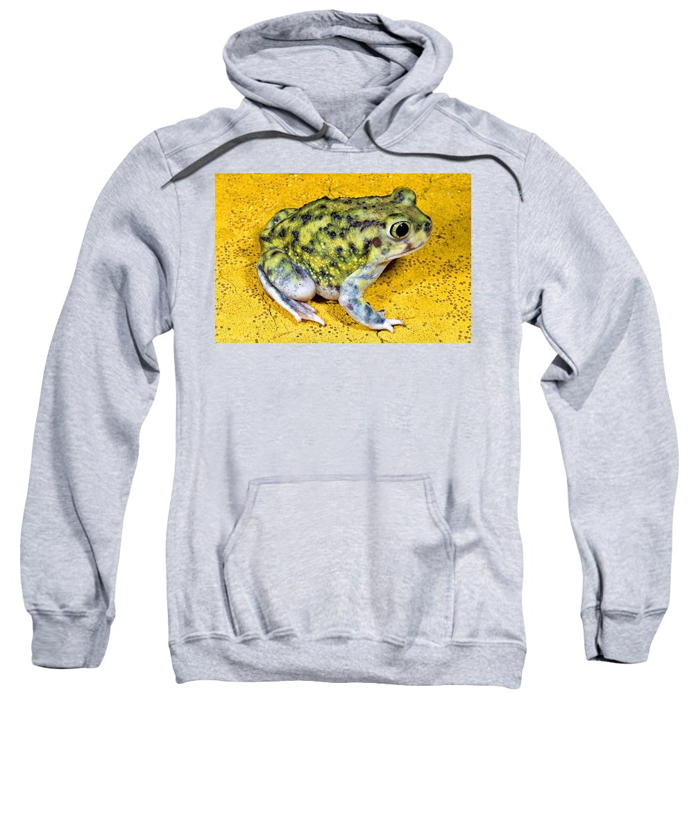 Animal Sweatshirt featuring the photograph A Spadefoot Toad by Jack Goldfarb