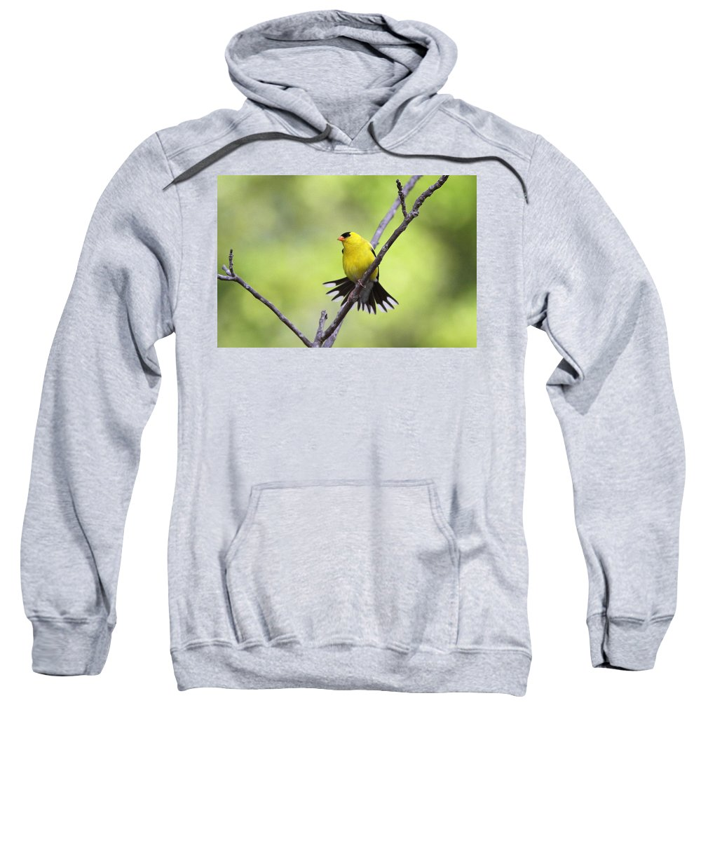 Goldfinch Sweatshirt featuring the photograph A Stretch Showing Beauty by Travis Truelove