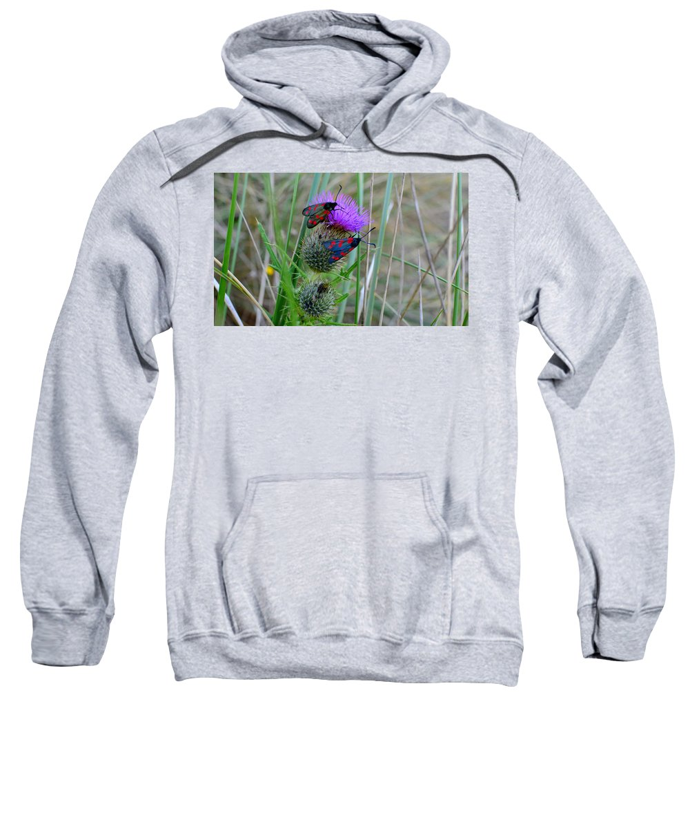 Moth Sweatshirt featuring the photograph Active by Barbara Walsh