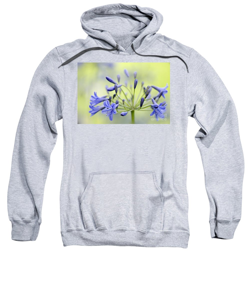 Agapanthus Headbourne Worthy Hybrid Castle Of Mey Sweatshirt featuring the photograph Agapanthus by Jacky Parker