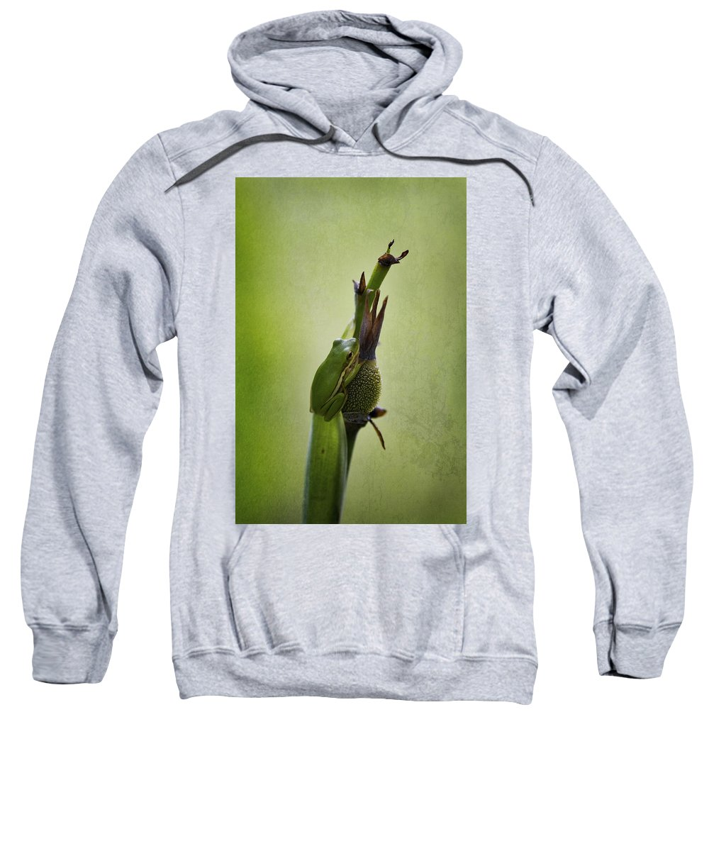 Hyla Cinerea Sweatshirt featuring the photograph Alabama Green Tree Frog - Hyla Cinerea by Kathy Clark