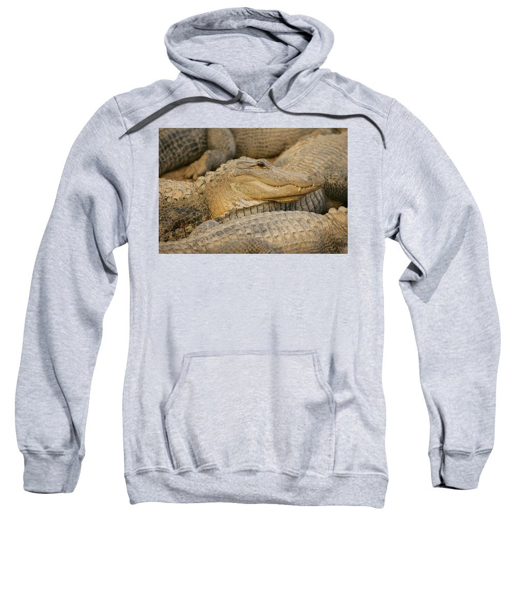 Horizontal Sweatshirt featuring the photograph Alligators by Don Hammond