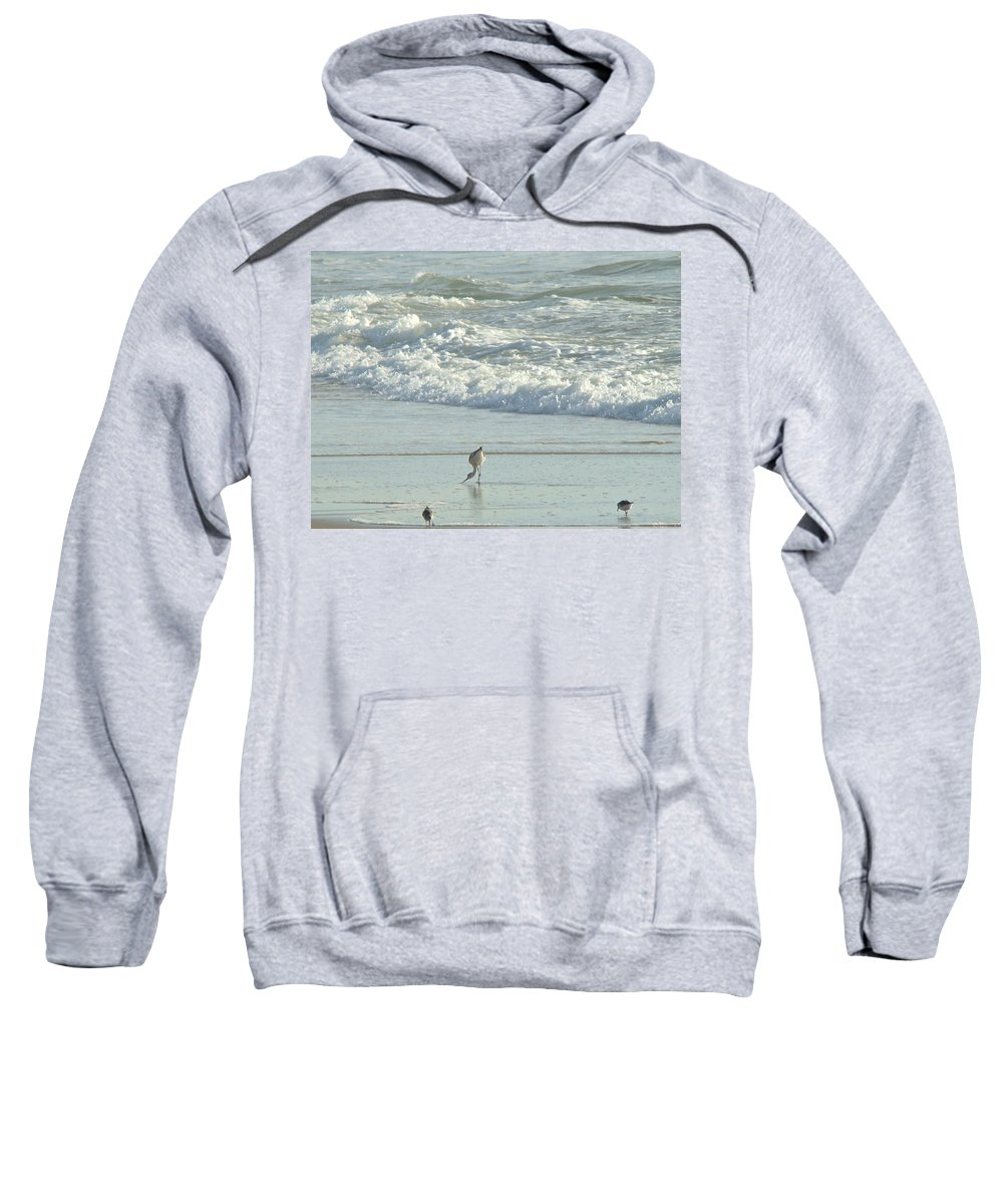 Avocet Sweatshirt featuring the photograph American Avocet In Non-breeding Plumage   Recurvirostra Americana by Mother Nature